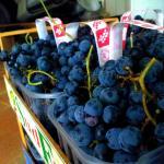 l'uva fragola, uno dei sapori recuperati dal META