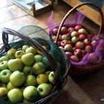 le meline del campo di Antonio, pronte per il carretto