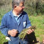 Antonio con gli asparagi selvatici
